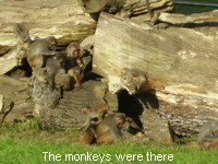 The monkeys were there