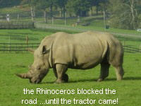 the Rhinoceros blocked the