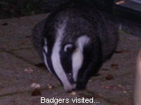 Badgers visited...